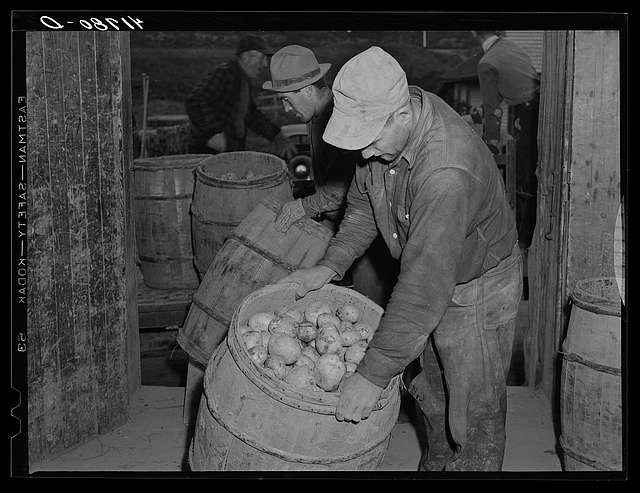73 Woodman potato company Images: Library Of Congress Public