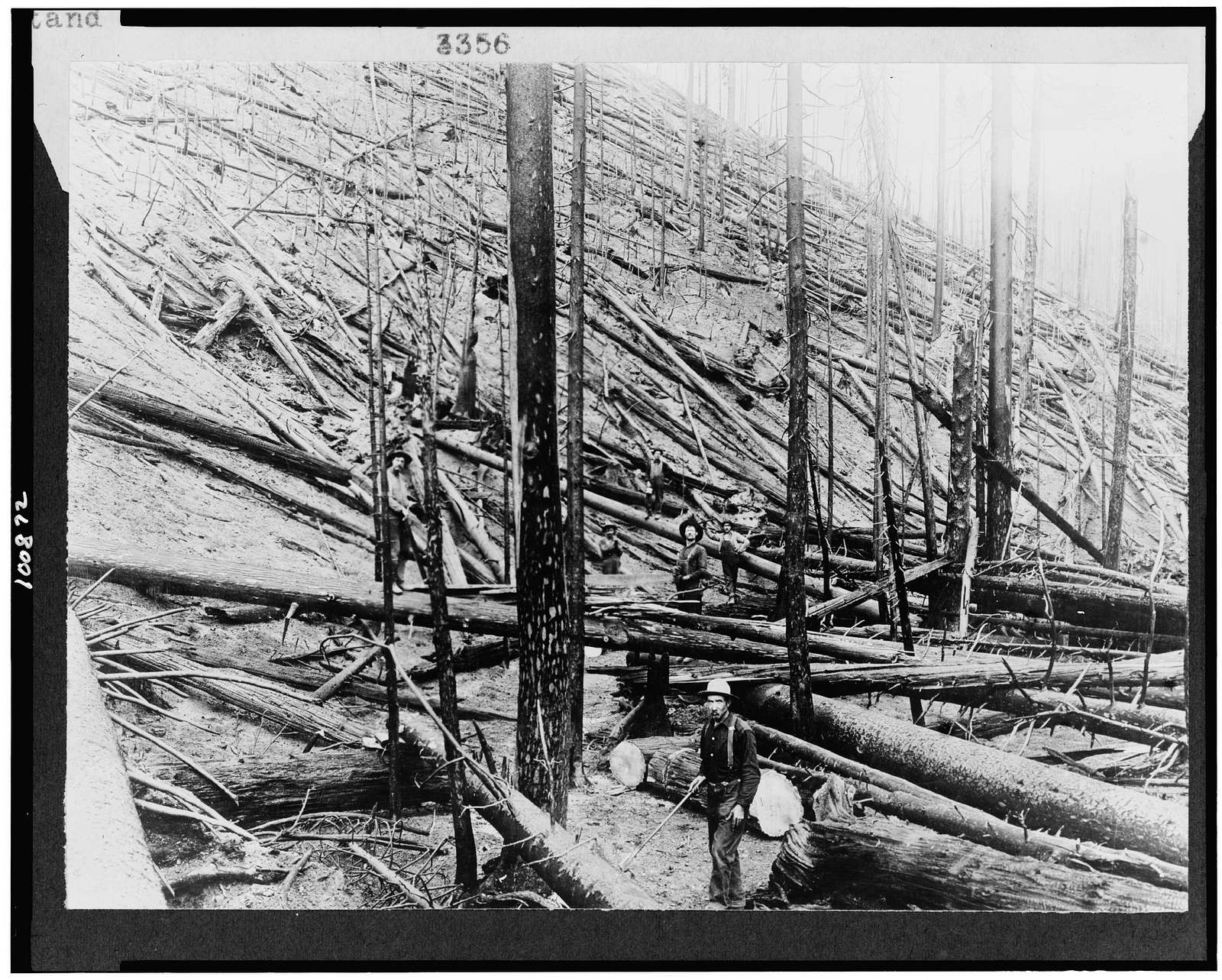 [Result of hurricane and fire in a heavy stand of Idaho white pine on Little North fork of St. Joe River, Coeur d'Alene, Idaho]