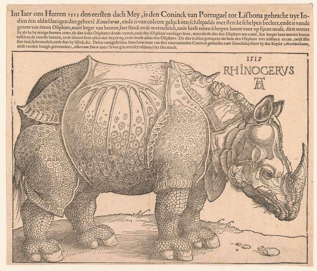 Rhinoceros / AD.
